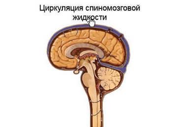 Циркуляция спинномозговой жидкости
