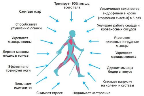 Воздействие нордической ходьбы на организм человека