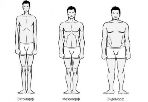 Соматотипы человека: октоморф, мезоморф и эндоморф