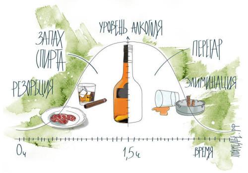 Фазы алкогольного опьянения
