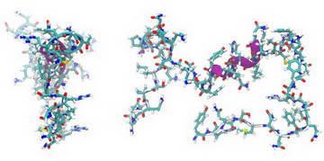 Строение пептидов