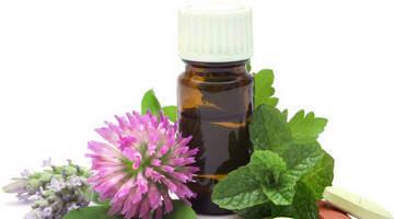Цветки клевера - источник фитоэстрогенов