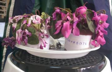 Полив цветов водой, кипяченой в микроволновой печи приводит к гибели