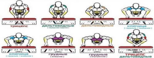 Какие мышцы работают в зависимости от положения рук