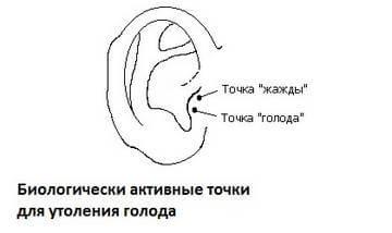 Активные точки на ушной раковине, управляющие аппетитом