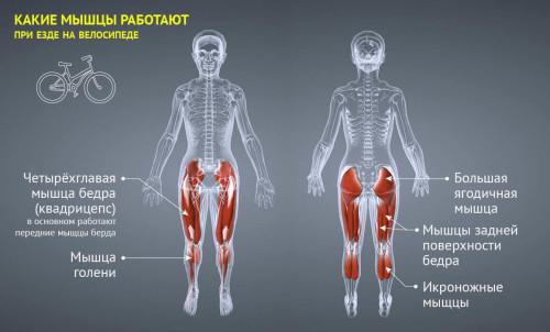 Мышцы задействованные при езде
